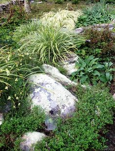 tickseed coreopsis, carex, hakonechloa, thyme, foxglove, low-bush blueberry   http://www.joenesgarden.com/