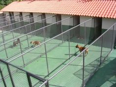 Como Construir um Canil (9) Dog Boarding Kennels, Pet Boarding, Outdoor Dog Area, Luxury Dog House, Dog Room Decor, Luxury Dog Kennels, Dog Kennel Designs, Pet Hotel, Dog Cages