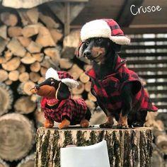 Canadian Crusoe & Friend