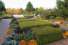 The Circle Garden planted with a variety of kales and mums for fall. From Chicago Botanic Garden.