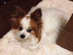 現在、コロナ禍で自宅勤務や、自粛生活をしている方が多いと思います。そんな中「ペットがいたら癒されるかも」と考えて、ペットを飼うことを検討されている方にお伝えしたいことがあります。 (末尾に写真特集があります) 筆者はこのコロナ禍の最... Dogs, Animals, Animales, Animaux, Pet Dogs, Doggies, Animal, Animais