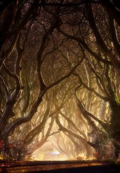 """Entwined - The Dark Hedges"" ~ by Gary McParland, taken in Armoy, County Antrim, Northern Ireland. The Dark Hedges is an avenue of 300 year old beech trees situated along Bregagh Road, 3 miles from the village of Stranocum. // I love this road. Dark Hedges Ireland, Beautiful World, Beautiful Places, Amazing Places, Beautiful Pictures, Tree Photography, Classic Photography, Artistic Photography, Landscape Photography"