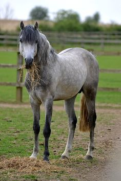 Ive always wanted a dapple grey mare....