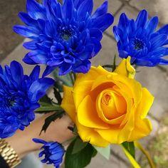 Blogger Rose, Flowers, Plants, Blog, Camilla, Inspiration, Biblical Inspiration, Pink, Blogging