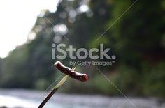 Edit Image #85927617: BBQ sausages enjoyed in wild nature - iStock