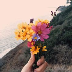 Imagen de flowers, nature, and sea