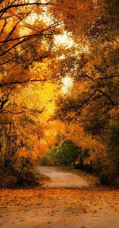 """""""Autumn along the way"""" bde Andy 58 Autum Leaves, Autumn Scenes, Wonderful Picture, Backrounds, Take Me Home, Great Photos, Amazing Photos, Pretty Pictures, Mother Nature"""