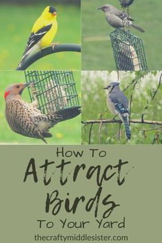 How To Attract Birds To Your Yard - Part 1 | The Crafty Middle Sister