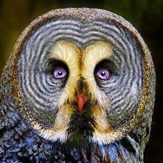beautiful owl face...                                                                                                                                                     More