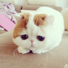 """kitty is adorable. Need A little pick me up today! Isn't she so """"not real"""" looking?"""