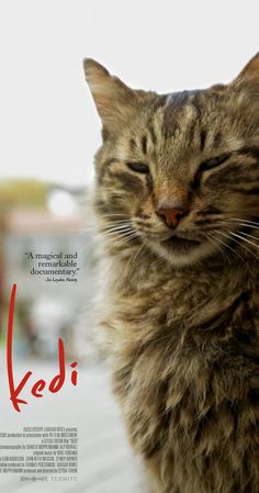 Directed by Ceyda Torun.  With Bülent Üstün. A profile of an ancient city and its unique people, seen through the eyes of the most mysterious and beloved animal humans have ever known, the Cat.