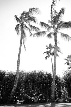 palm trees, warm breeze.     were there is palm trees anna is happy I love them