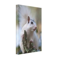 >>>best recommended          Astronaut Squirrel Gallery Wrap Canvas           Astronaut Squirrel Gallery Wrap Canvas We have the best promotion for you and if you are interested in the related item or need more information reviews from the x customer who are own of them before please follow th...Cleck Hot Deals >>> http://www.zazzle.com/astronaut_squirrel_gallery_wrap_canvas-192375017421670840?rf=238627982471231924&zbar=1&tc=terrest
