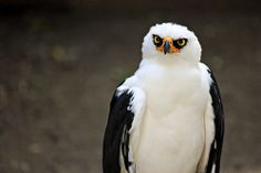angry bird by Magalie L'Abbé on Flickr.