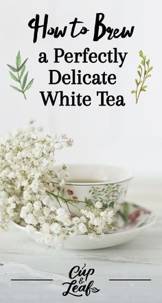 How to Brew a Perfectly Delicate White Tea - Cup & Leaf Matcha Tea Benefits, White Tea Benefits, Best Teas For Health, Best Herbal Tea, Herbal Teas, Best Tea Brands, Best Matcha Tea, How To Make Matcha, White Tea Cups