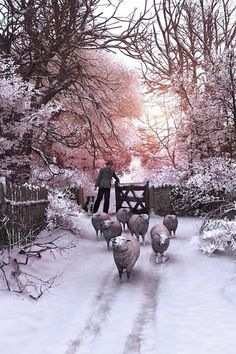 Winter via Carolyn Aiken