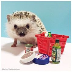 """Thank goodness there was a sale on tiny olive oil today."" 