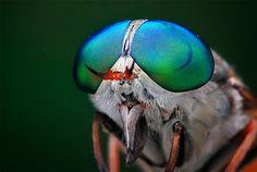 Удивительные макро фотографии насекомых Шикхеи Го | Amazing macro photography of insects by Shikhei Goh