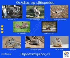 Mammals (part Mammals (part a & # # Greek # words . Learn Greek, Greek Language, Greek Words, Chipmunks, Mammals, Squirrel, Vocabulary, Learning, Kids