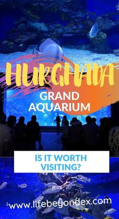 Is Hurghada Grand Aquarium worth visiting? When to go? Best Places To Move, Hurghada Egypt, Egypt Culture, Egypt Fashion, In The Zoo, Visit Egypt, Egypt Travel, Maybe Someday, Red Sea