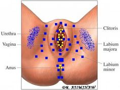 MyoFascial Therapy and Research Foundation®: Home based MFR managements for pelvic floor dysfunctions