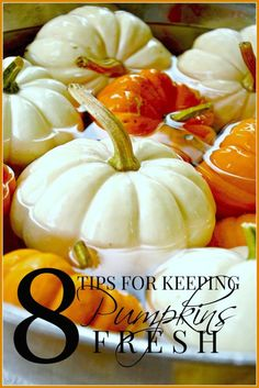 KEEPING PUMPKINS FRESH- Easy tips for keeping pumpkins fresher longer-stonegableblog.com