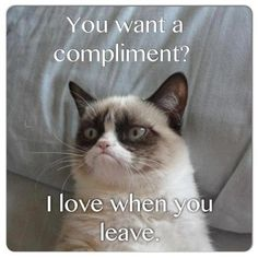 Grumpy cat, grumpy cat meme, grumpy cat humor, grumpy cat quotes, grumpy cat funny …For the best humour and hilarious jokes visit www. Grumpy Cat Quotes, Funny Grumpy Cat Memes, Funny Animal Memes, Cute Funny Animals, Funny Animal Pictures, Funny Cats, Funny Jokes, Cat Jokes, Funniest Animals