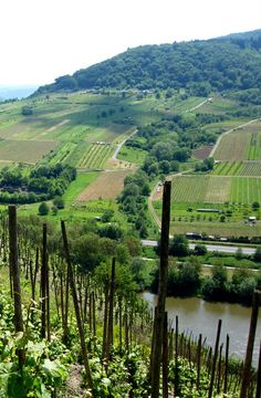 Mosel River vineyards... Germany