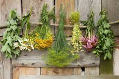 Image result for herbs for health