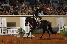 2012 Built Ford Tough AQHYA Working Hunter World Champions Taylor Myers and Capture The Flag