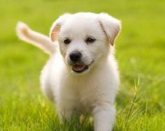 puppy's - Google zoeken