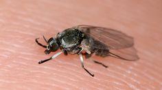 Kriebelmücken-Alarm in Berlin