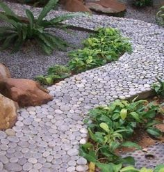 Natural stone pebbles are a fantastic material for yard landscaping and designing beautiful garden with unique and fabulous paths created with beach pebbles