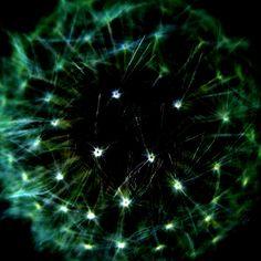 Galaxies.  looks like a dandelion to me.