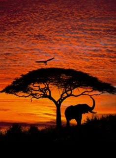 An African elephant relaxes under a tree with the picturesque skies of the African sunset. Take a Safari to the African Serengeti as you relax in front of this spectacular wall mural. African Sunset, Photo Mural, Sunset Wallpaper, Wallpaper Murals, Wallpaper Roll, Photo Wallpaper, Art Africain, African Elephant, African Animals
