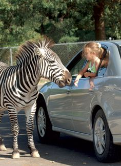Exotic Animal Paradise drive-thru park / East of Springfield, Missouri on I-44