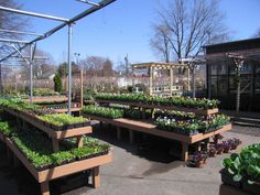 Maine Bucket is proud to manufacture a large variety of wooden products, including our beautiful Classic Cedar Bench. Garden Nursery, Plant Nursery, Garden Center Displays, Cedar Bench, Cedar Garden, Wood Display, Garden Shop, Store Displays, Horticulture