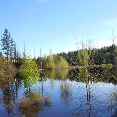 Love Sammamish on a sunny afternoon pnwonderland walkies spring