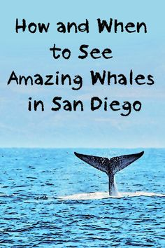 When, where and how to go whale watching in San Diego - and what you might see by season.
