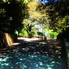 Devonport Park #park #summer #sun #shade