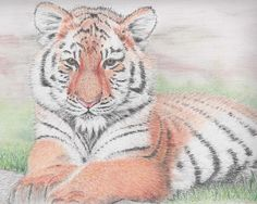 Tiger lying in the sun; Drawing with pastel pencils on watercolor paper size Sun Drawing, Drawing Style, Pastel Drawing, Big Cats Art, Cat Art, Animal Drawings, Art Drawings, Pastel Pencils, Paper Size