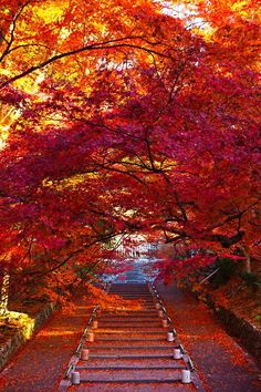 Autumn in Japan Beautiful World, Beautiful Places, Beautiful Pictures, Autumn Leaves Japan, Fall Leaves, Autumn Scenes, All Nature, Fall Pictures, Belle Photo