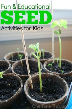 This post is full of fun and educational SEED activities including tips for growing seeds & science, sensory & arts and crafts seed activities.