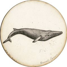 BY TATIANA GOMEZ ZAPATA #illustration #pencildrawing #drawing #whale