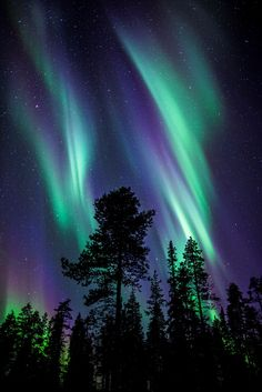 Colours of the Aurora Borealis Stunning Northern Lights in the Lapland sky. Aurora Borealis, Northen Lights, Natural Phenomena, Beautiful Sky, Pretty Sky, Beautiful Lights, Science And Nature, Natural Wonders, Belle Photo