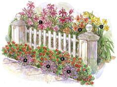 V lete kvitnúce cibuľoviny   Kvety a Záhrada