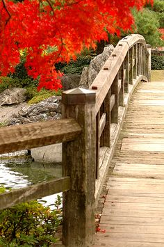 Shiratori Garden, Nagoya, Japan 白鳥庭園