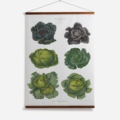 'Cabbages' Wall Chart