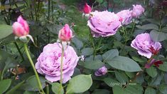 Topiary, Rose, Flowers, Plants, Diy, Gardening, Pink, Bricolage, Lawn And Garden