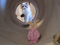 Clooney's Num-Num Fund: Tunnel Tuesday